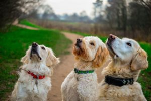 Dog training treats help your dog pick up new behaviors