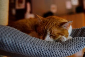 Cat hammocks let your kitty snooze in ultimate comfort