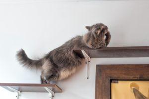 Cat wall shelves enrich your cat's life