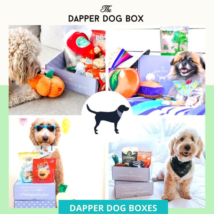 Dapper Dog Box