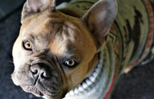 Dog sweaters keep your dog warm in cold weather