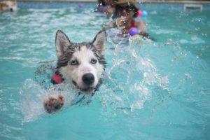 Turns out not all dogs swim