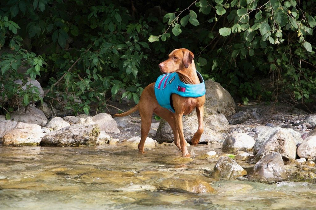 A properly fitted lifejacket is a must for water activities