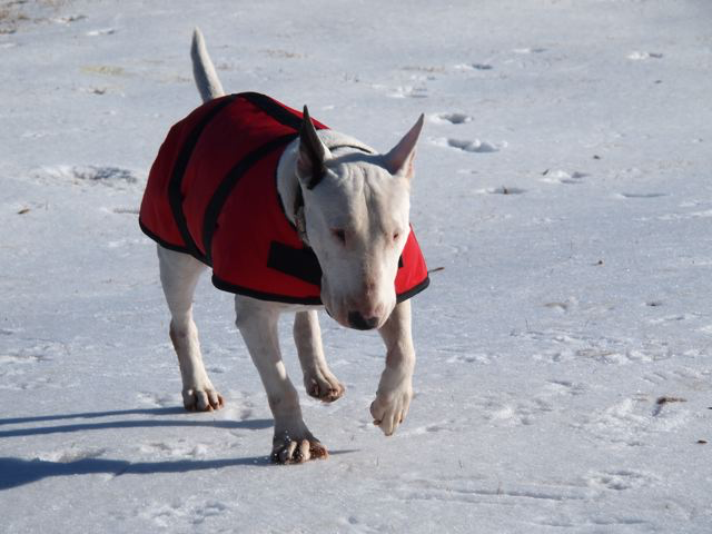 Foggy Mountain Winter Dog Coat