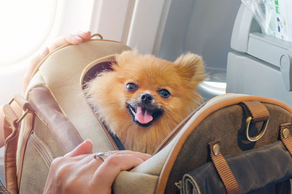 It's tempting, but never let your dog out of their carrier during the flight