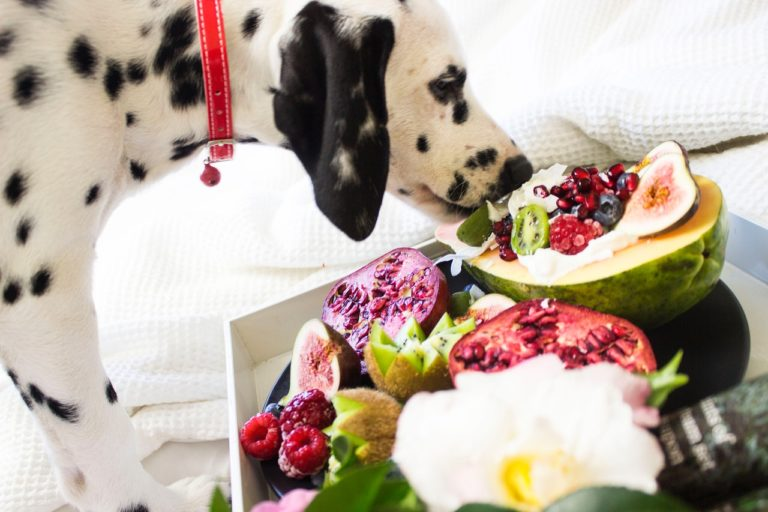 Probiotics for dogs may or may not help your canine
