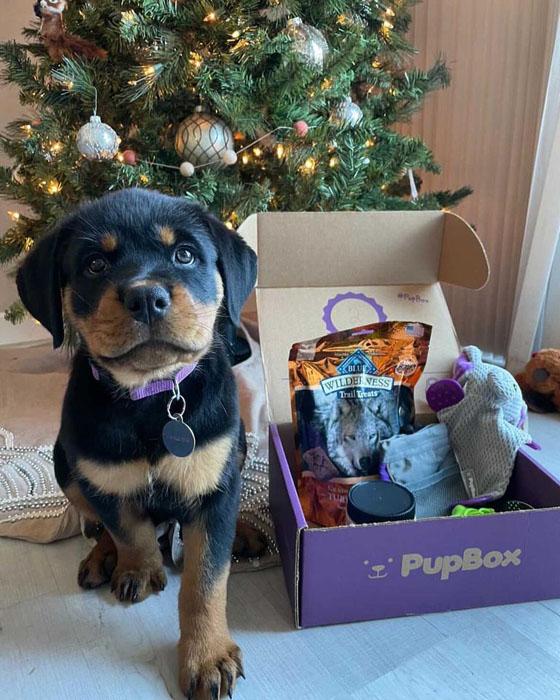 PupBox Dog Subscription Box