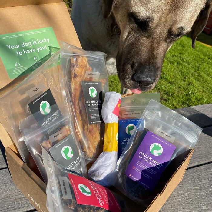 Real Dog Subscription Box