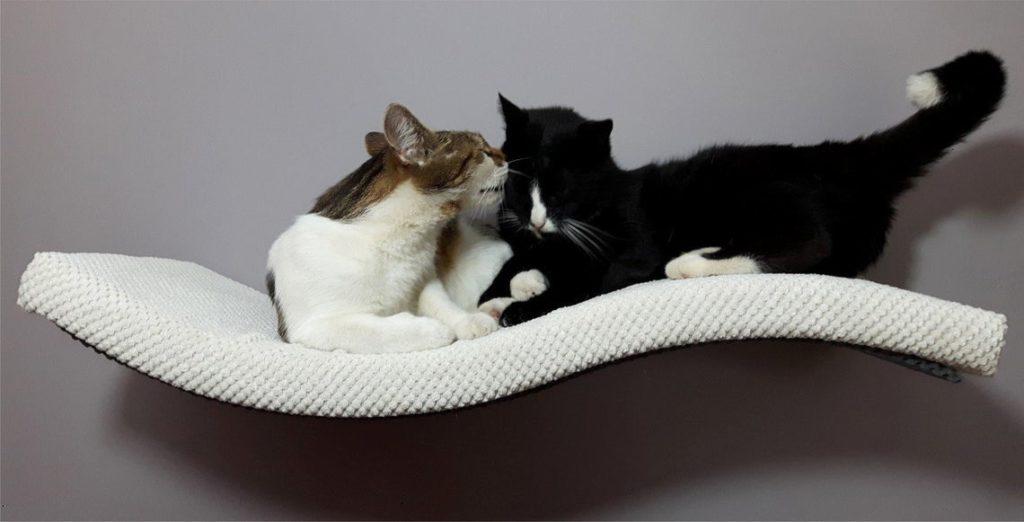 4 My Pet Exclusive Cat Shelf