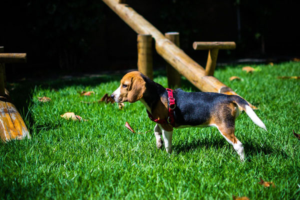 Puppy-proofing the yard allows your kiddo to explore safely