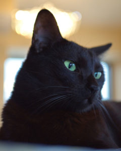 Black cat names are often expected, but you can go special