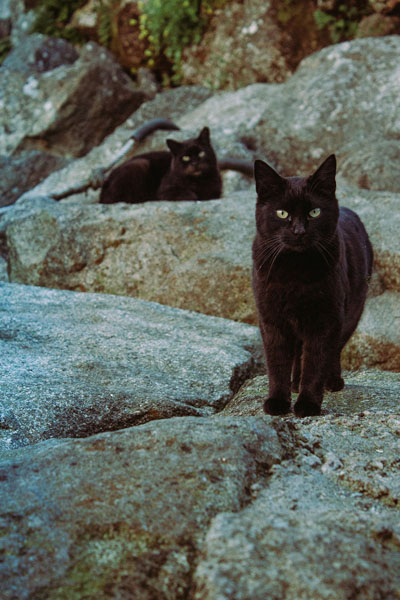 Black cats featured in positive and negative mythology