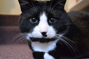 Black and white cat names come from their stunning patterns