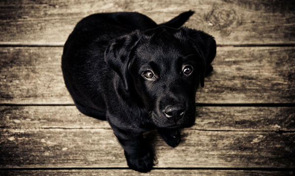 Always look at your puppy's personality before sorting through black dog names
