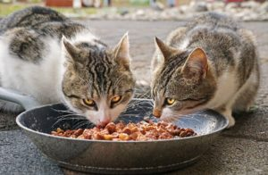 Canned cat food offers more variety in flavors