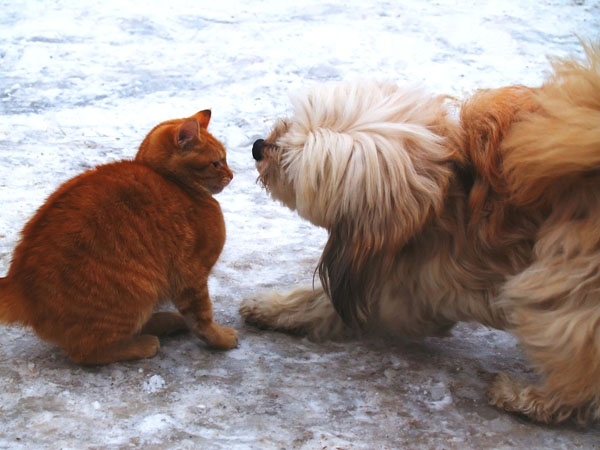 Cats don't appreciate dogs raiding their litter boxes