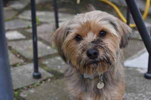 Dogs eating dirt often puzzles us