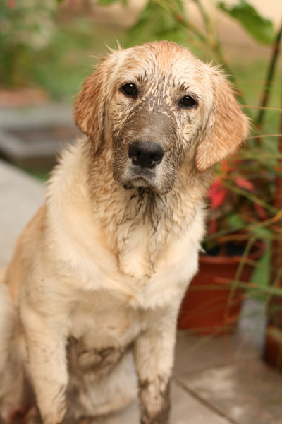 Dogs eating dirt has a number of different causes