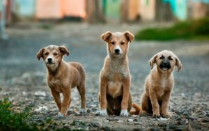 Dog growth depends on many factors