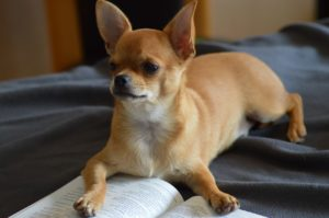 Dog training books can help your pup with a variety of situations
