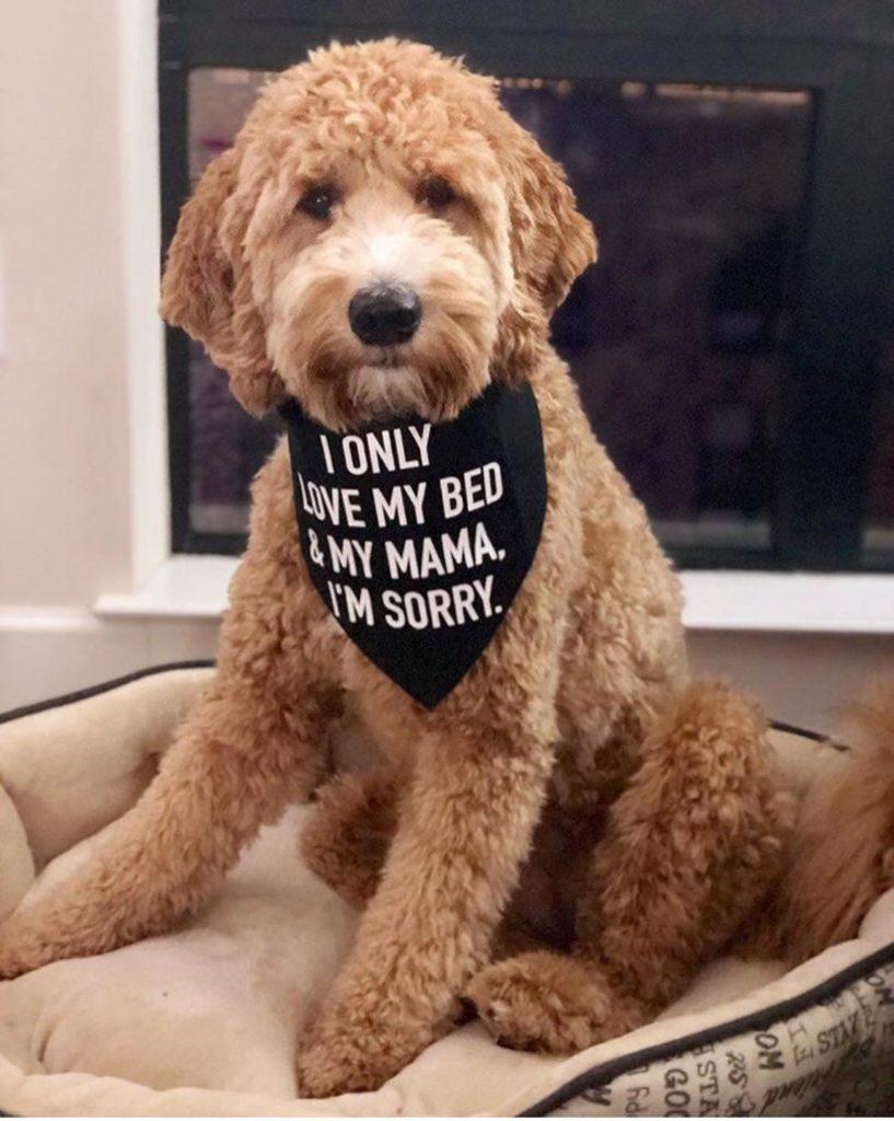 Dog Mama Shirt Shop Dog Bandana