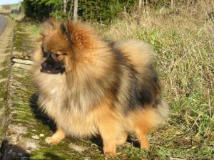 Fluffy dog breeds trigger that innate desire to snuggle