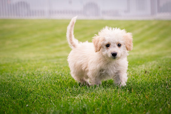 Smaller breeds grow faster than larger breeds