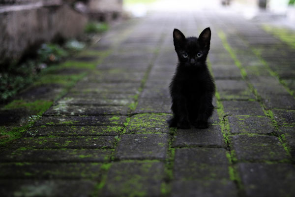 When you first bring a black kitten home, observe their personality before deciding on a name