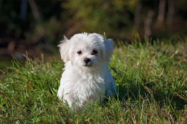 Winter-themed white dog names are extremely popular