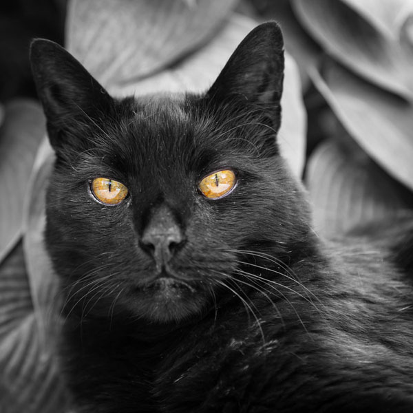 Black cat names based on Halloween are hard to avoid