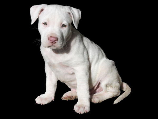 Look at all of your puppy's qualities before thinking of white dog names