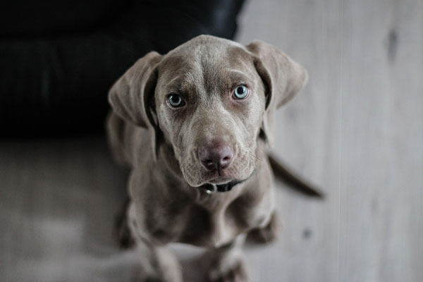 Spaying or neutering are critical procedures for puppies