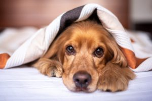 Don't let the cost to spay or neuter a dog frighten you