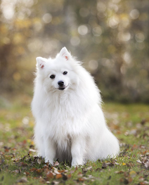White dog names CAN come from mythology - the GOOD side