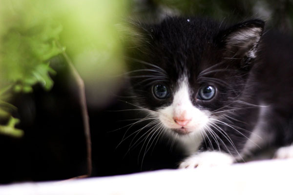 Get to know your kitten before going through names