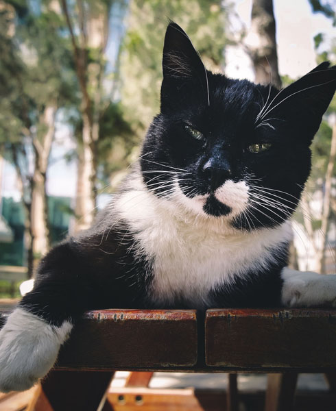 Tuxedo cats are one of the most popular color patterns
