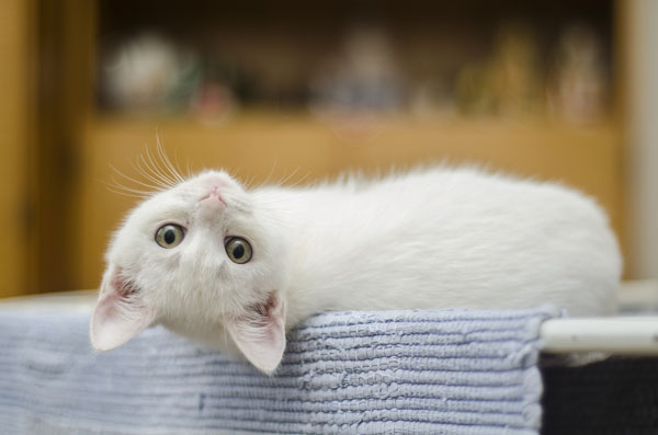 Don't know what your cat's thinking? Choose white cat names that reflect it!