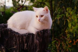 White cat names should conjure a sense of mystery