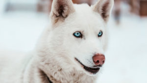 White dog names don't have to fall into the overused patterns