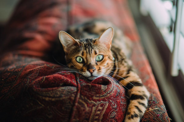 With careful observation, you can help avoid a stressed cat