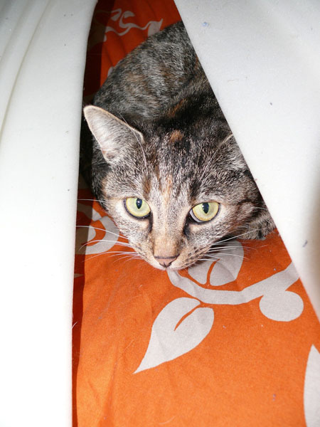 Hiding is a sign of a stressed cat