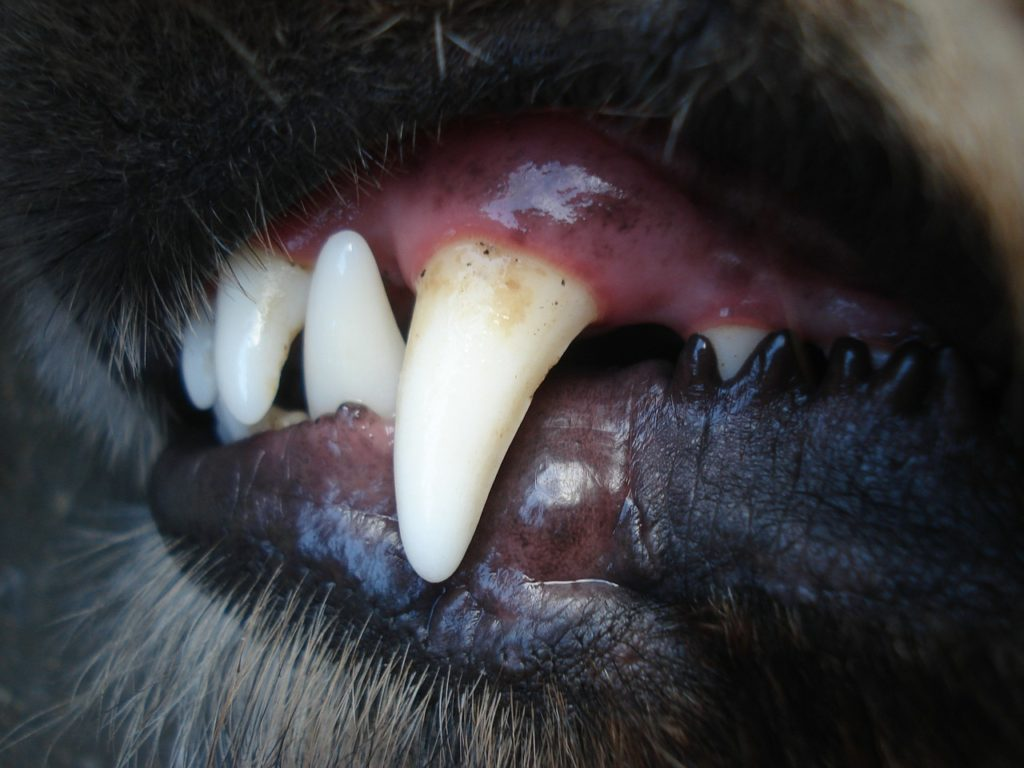 Brushing a dog's teeth will prevent the build-up of plaque and tartar