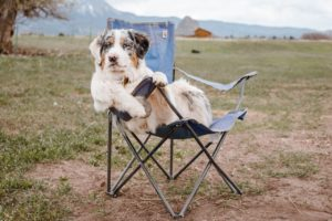 The best dog movies leave you feeling brighter and happier
