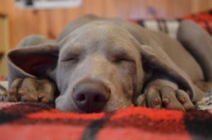 Dogs and sleep are often tricky questions for owners