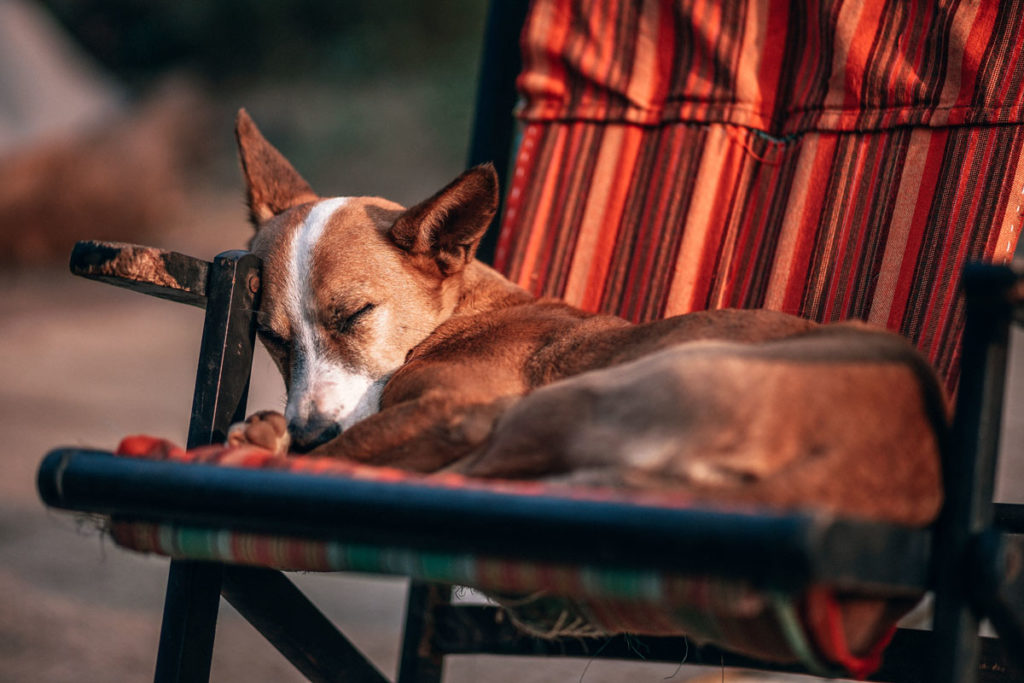 Not every dream is pleasant - and the same is true for dogs