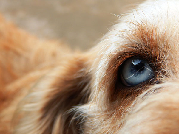 Your dog gains a lot of information through their vibrissae