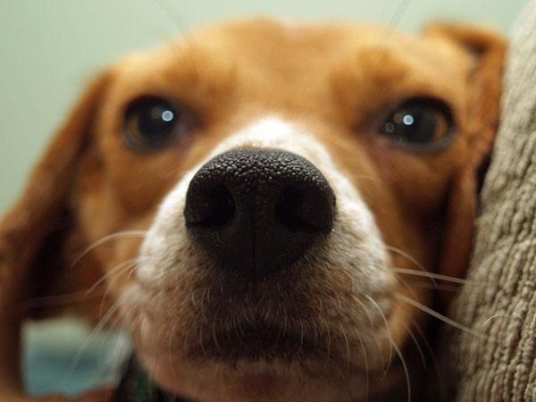 Dog whiskers appear above the eyes, on the sides of the muzzle, and under the chin