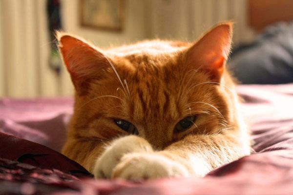 Orange cats have lazy reputations