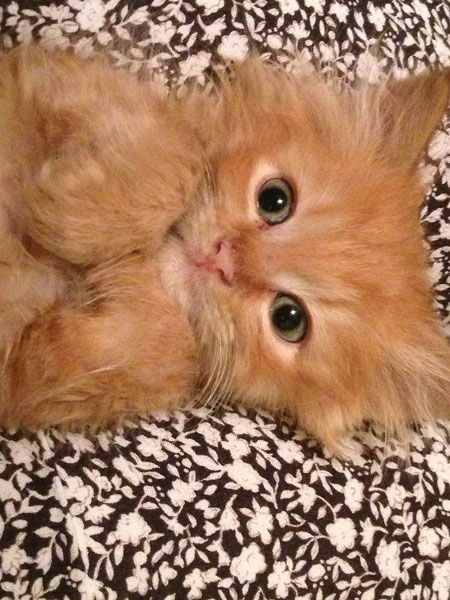 With such out-going personalities, orange kittens are easy to fall in love with