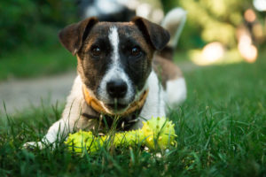 Squeaky toys are some of the most popular dog toys